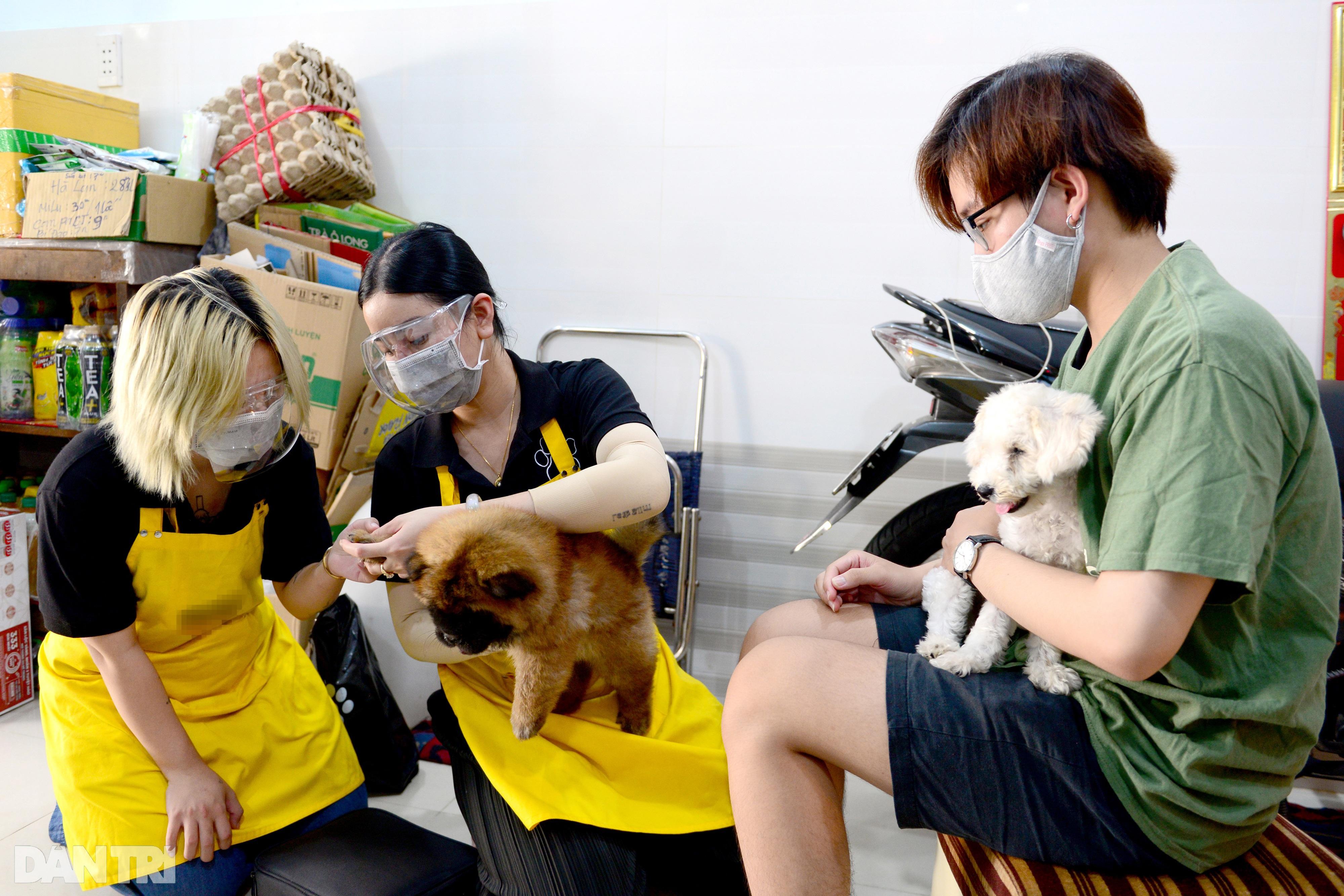 Đắt khách dịch vụ làm đẹp cho thú cưng tại nhà ở TPHCM mùa Covid-19 - 9