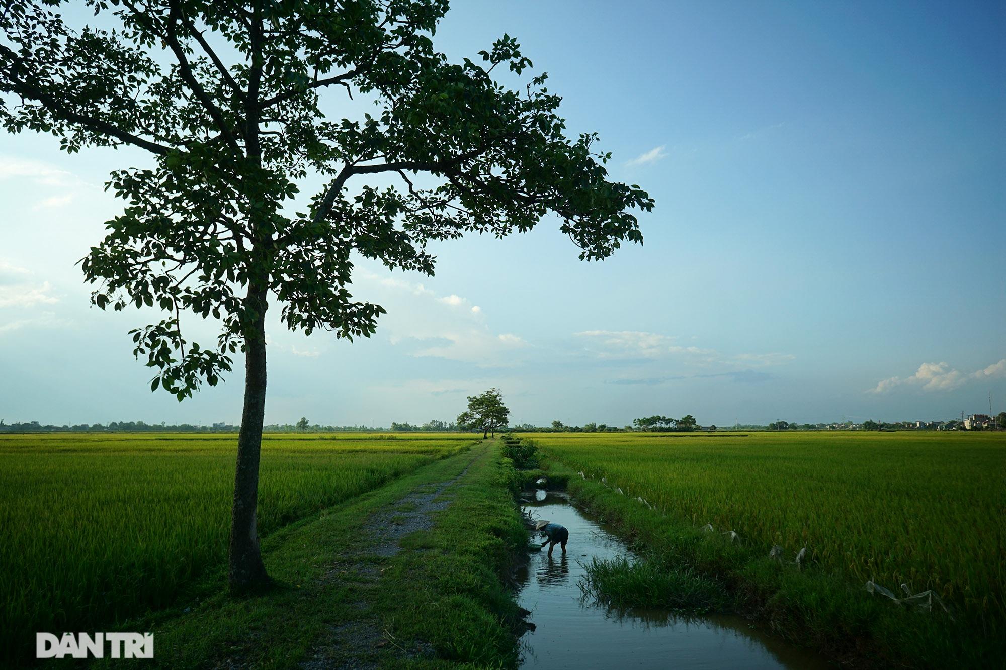 Bình yên những chiều quê ở ngoại thành Hà Nội - 1