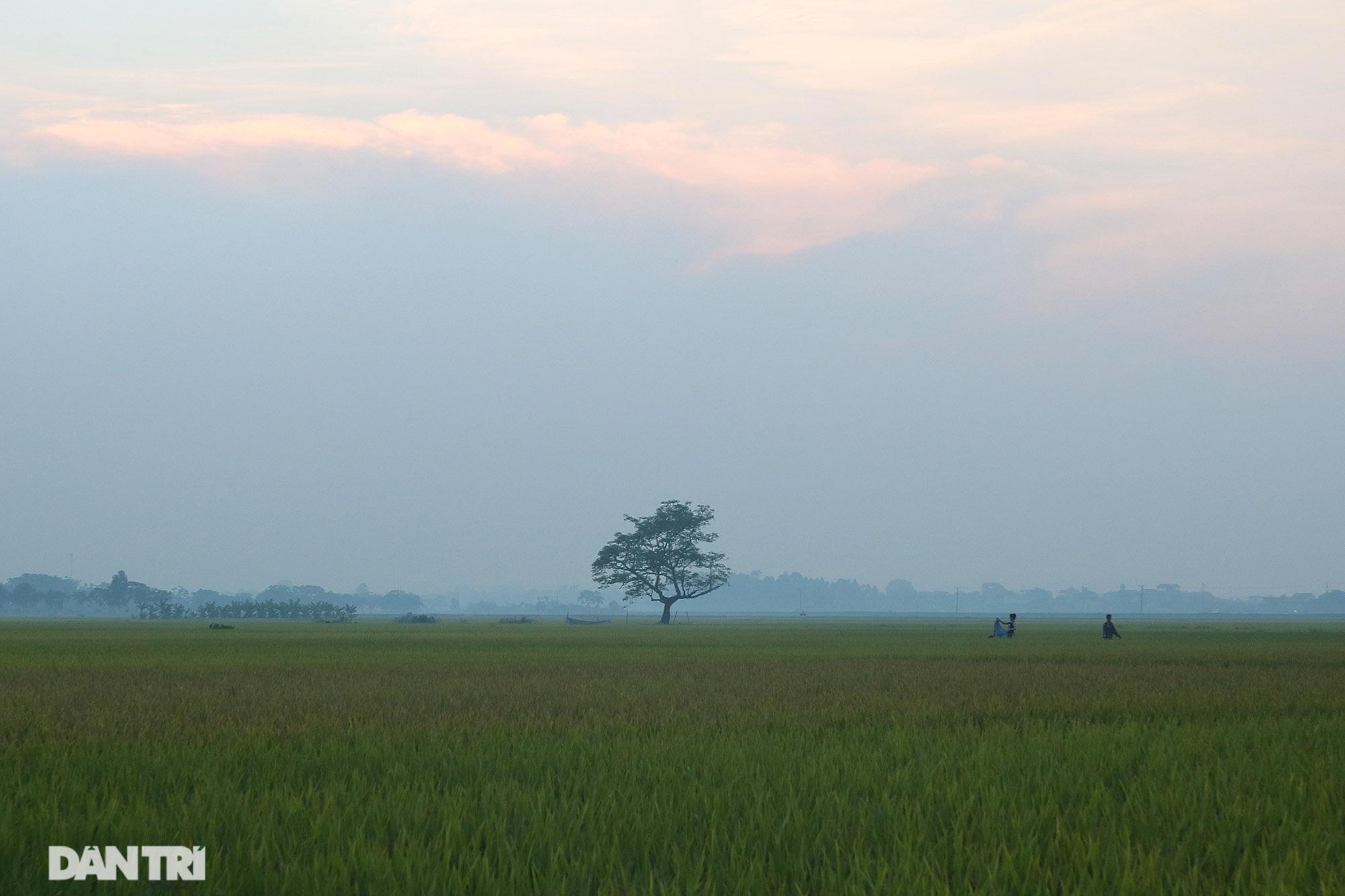 Bình yên những chiều quê ở ngoại thành Hà Nội - 13