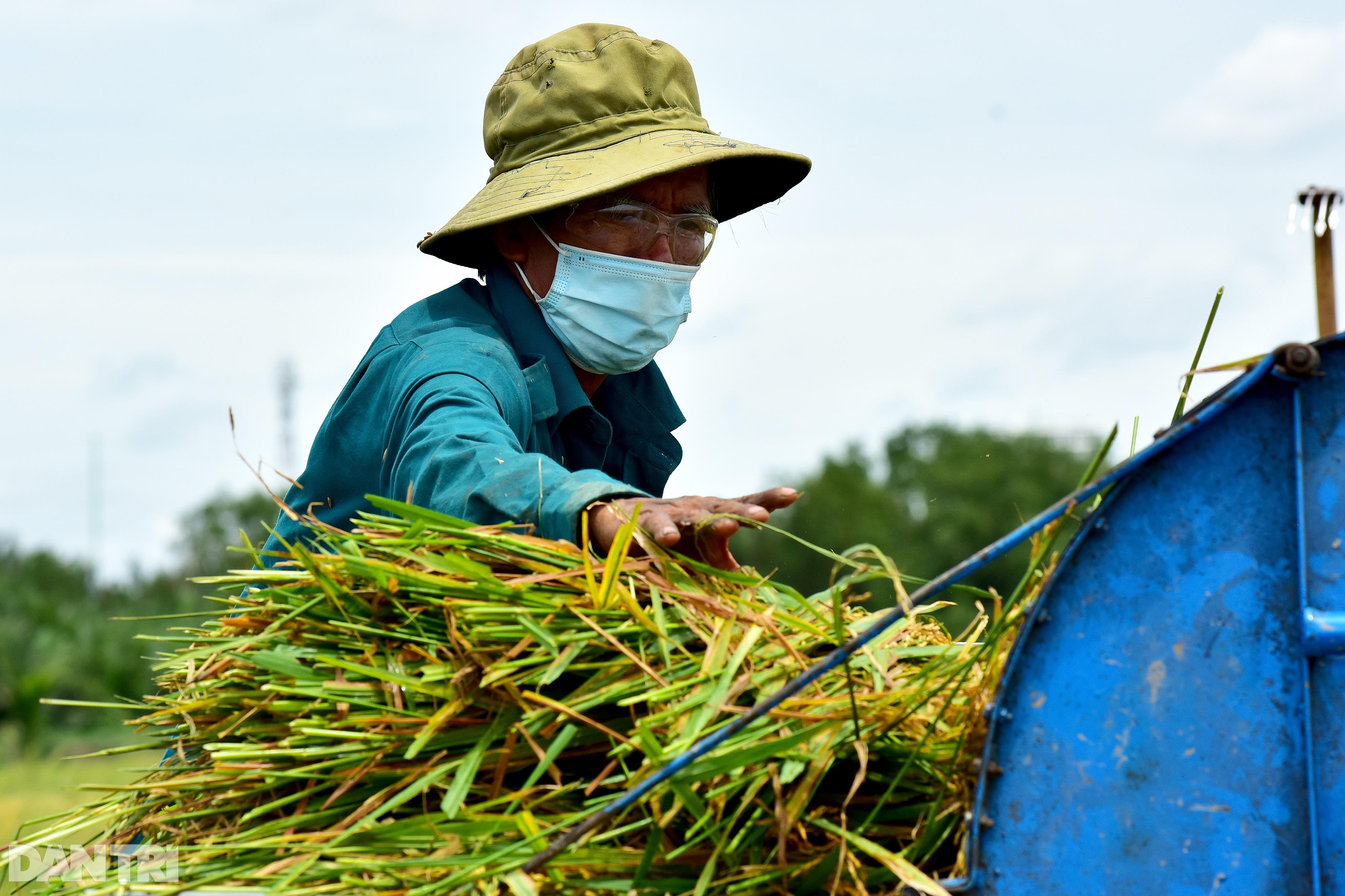Công nhân_gặt lúa_TP Thủ Đức_Nguyễn Quang_7.jpg