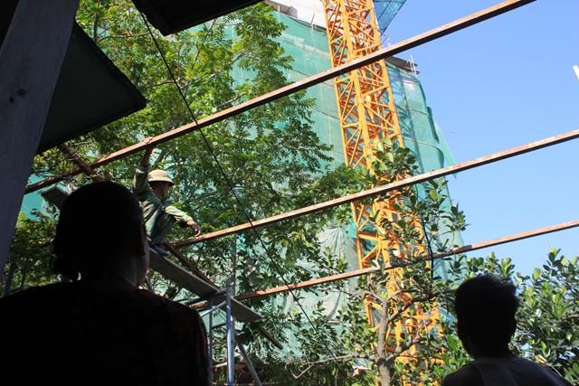Các dự án bị đình chỉ phần lớn do cần cầu tháp hoạt động trong khu vực có khu dân cư.