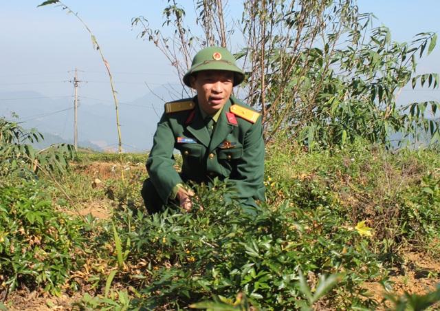 Thiếu tá Bùi Văn Hải giới thiệu về dự án phát triển cây dược liệu Đoàn Kinh tế quốc phòng 4 đang triển khai tại xã Na Ngoi.