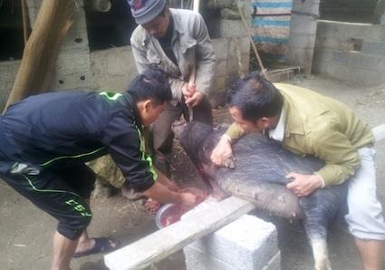 Công đoạn chuẩn bị và gói bánh chưng của bà con huyện Trung Khánh, Cao Bằng rất tỷ mỉ và cẩn trọng.