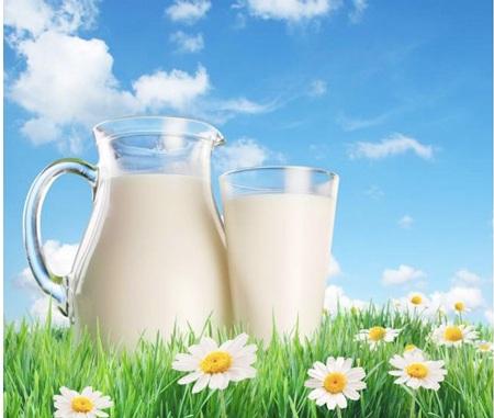 Sữa tiệt trùng có phải là sữa tươi? - 1