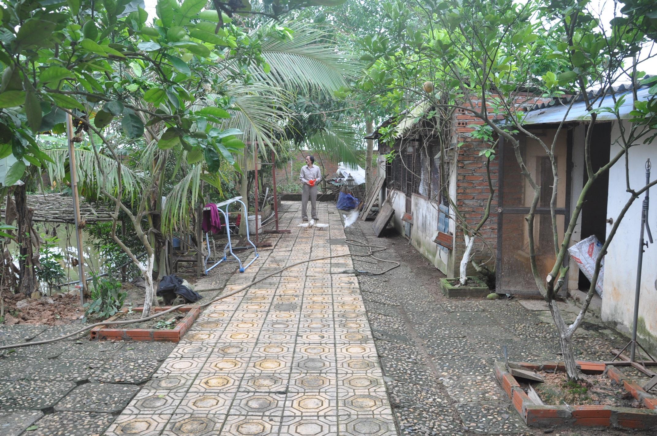 Lối ra chuồng gà, chuồng chim bồ câu được anh thiết kế rộng rãi với những ô chuồng sạch sẽ.