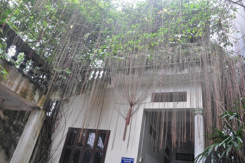 Ngôi nhà của nghệ sĩ dù cũ kĩ với những rêu bám nhưng đầy bóng mát.