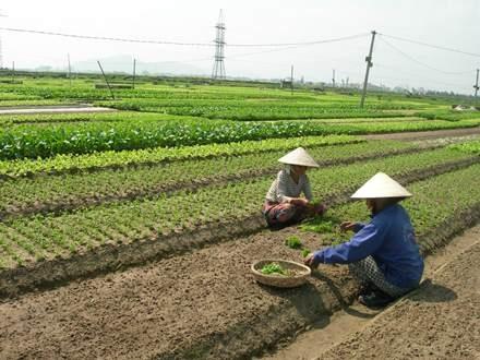 Đà Nẵng giảm được hơn 6.800 hộ nghèo năm 2013