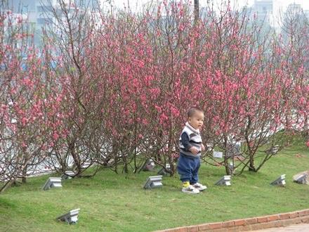 Em bé bên những cây đào đỏ rực