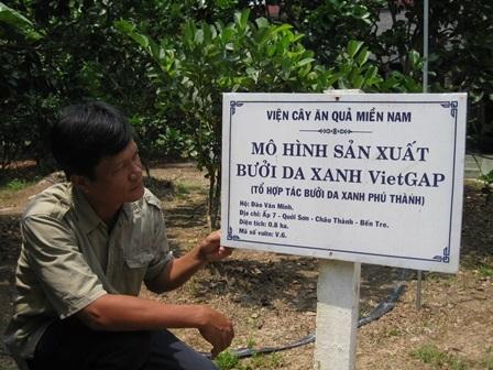 Vườn BDX của ông Minh sản xuất theo tiêu chuẩn VietGAP
