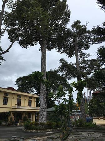 Công nhận 10 cây, cụm cây di tích lịch sử, văn hóa - 4