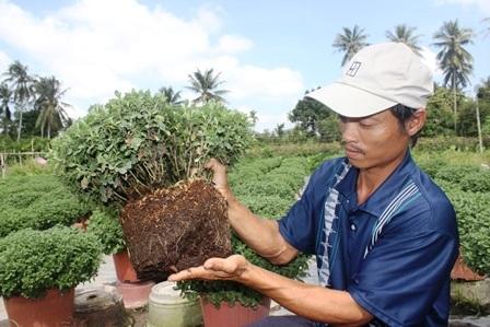 Mất mùa hoa Tết vì thuốc bảo vệ thực vật - 7