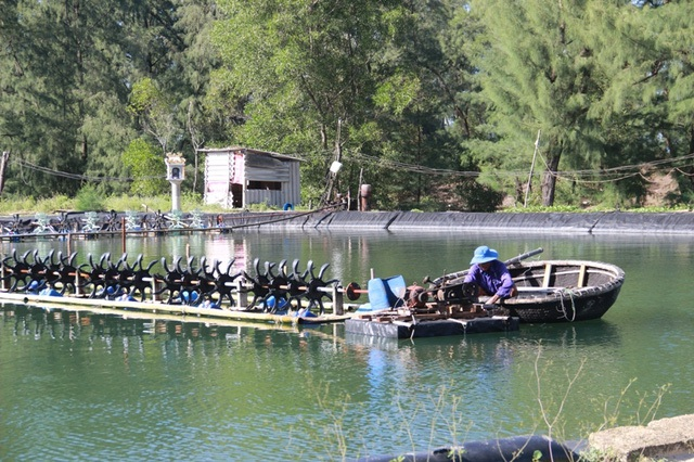 Nhiều hộ nuôi tôm tại Quảng Trị bị thua lỗ vì ảnh hưởng của sự cố môi trường