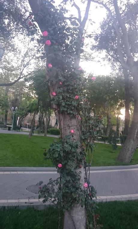 Baku - thủ đô tuyệt đẹp bên bờ Caspi