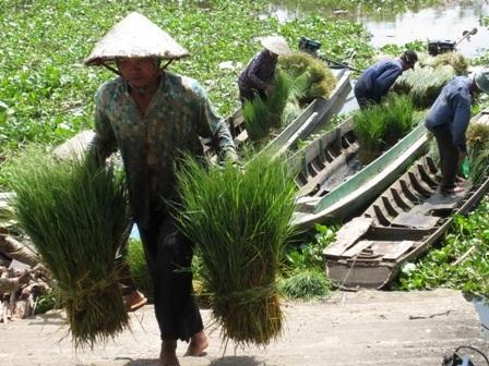 Nguồn rắn ở chợ chủ yếu là do từ nước bạn Campuchia mang qua bán lại cho các thương lái Việt.
