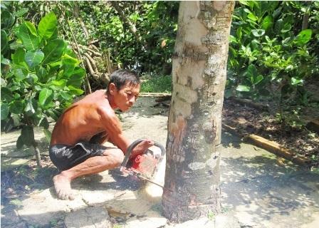 Dù bị mất một bàn tay nhưng ông Đấu hành nghề cưa cây suốt 40 năm qua
