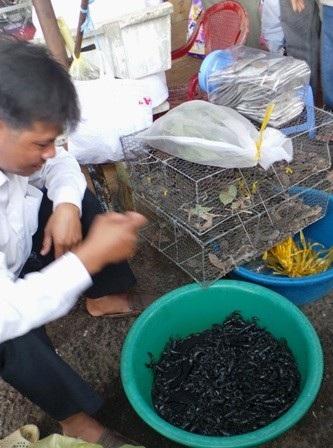 Chợ côn trùng hay còn gọi là chợ sung dược mọc lên ở một góc chợ Tịnh Biên.