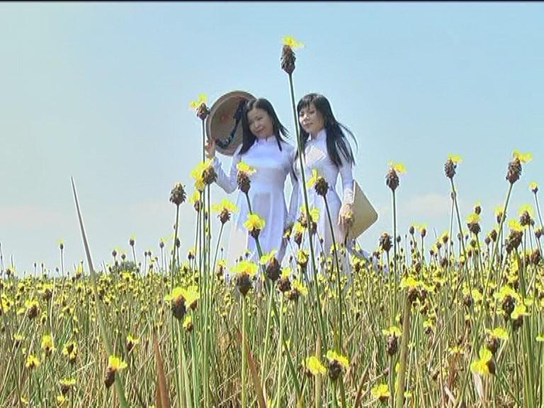Nhiều bạn trẻ đến chụp ảnh với hoa Hoàng Đầu Ấn