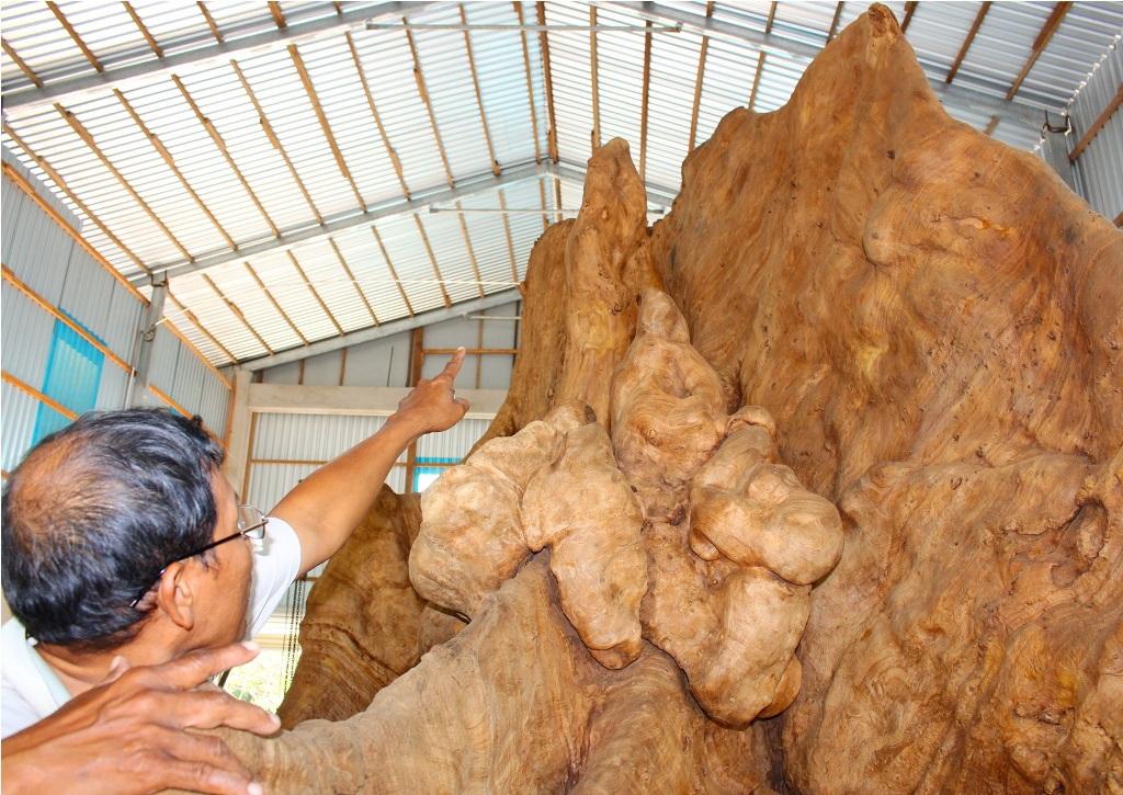 Thân cây bàng đá sẽ được tận dụng vào việc chế tác đài hoa sen đặt trên bộ rễ