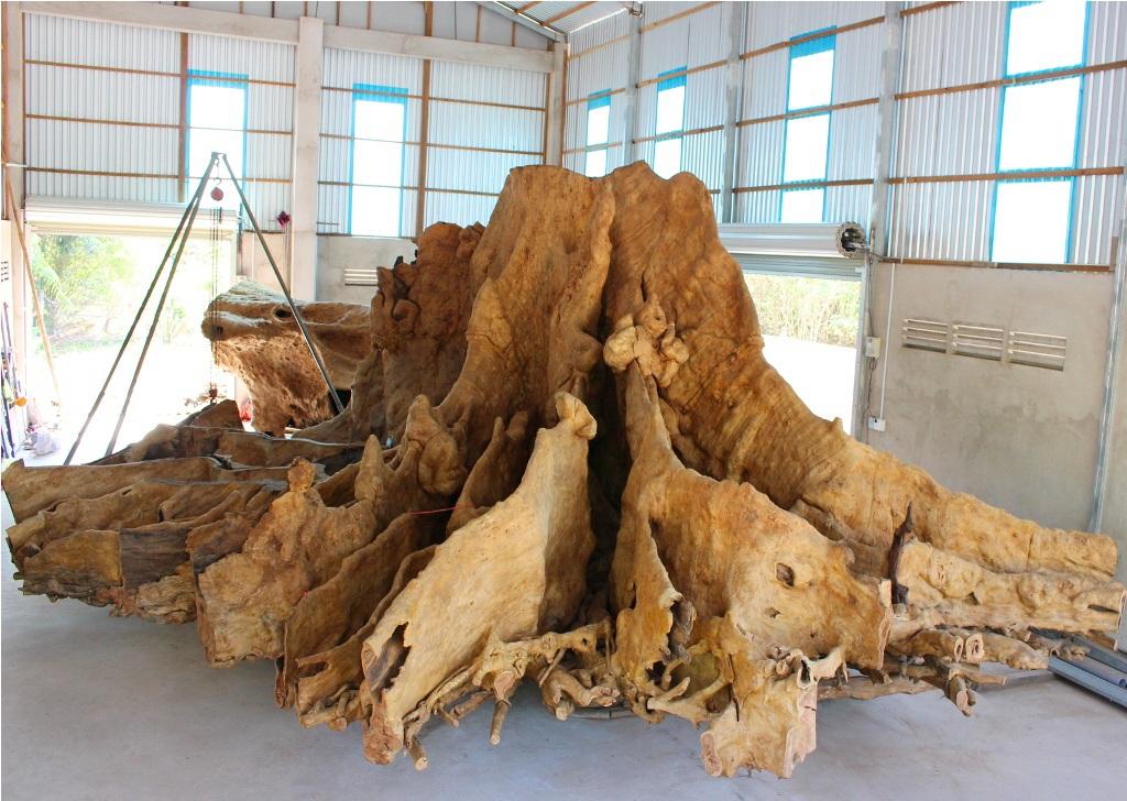 Bộ rễ cây bàng đá của ông Mai Kiên sau khi chỉnh sửa, gọt giũa vẫn nặng trên 25 tấn