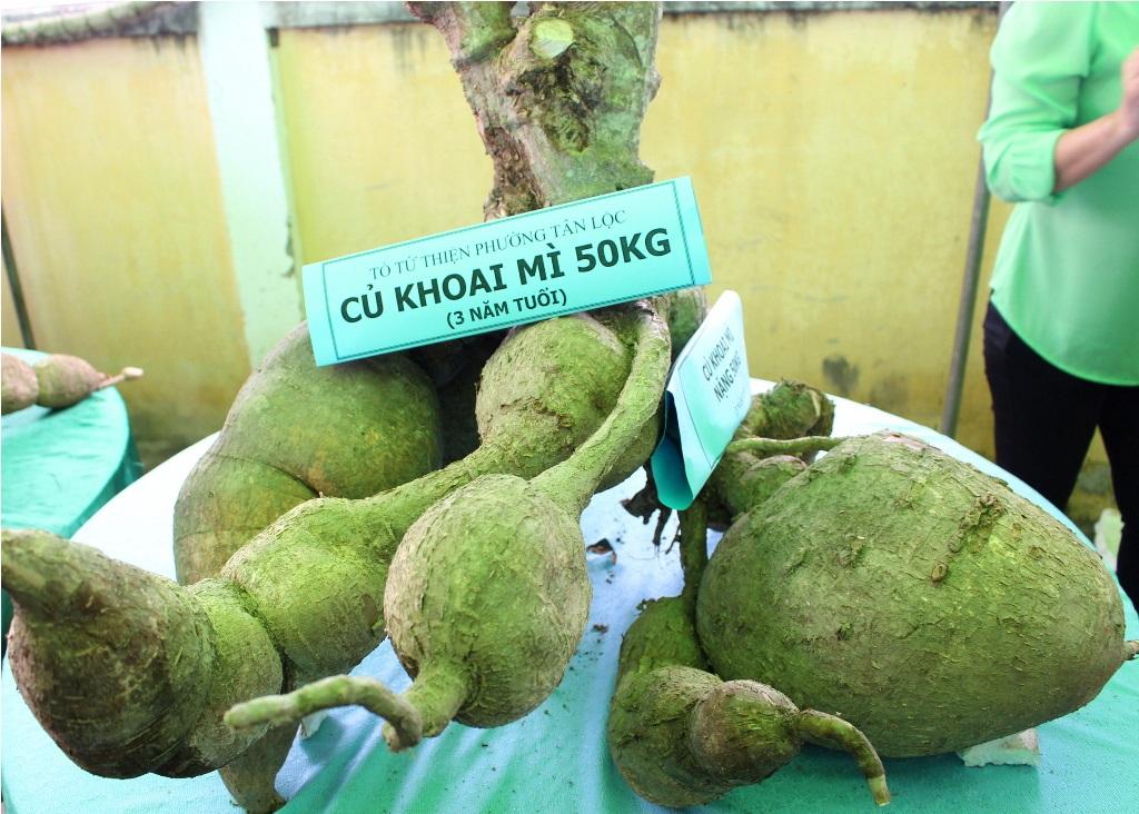 Rất đông người dân đến xem và chụp ảnh củ khoai mì độc lạ này
