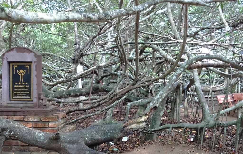 Khu di tích Giàn Gừa độc đáo ở huyện Phong Điền