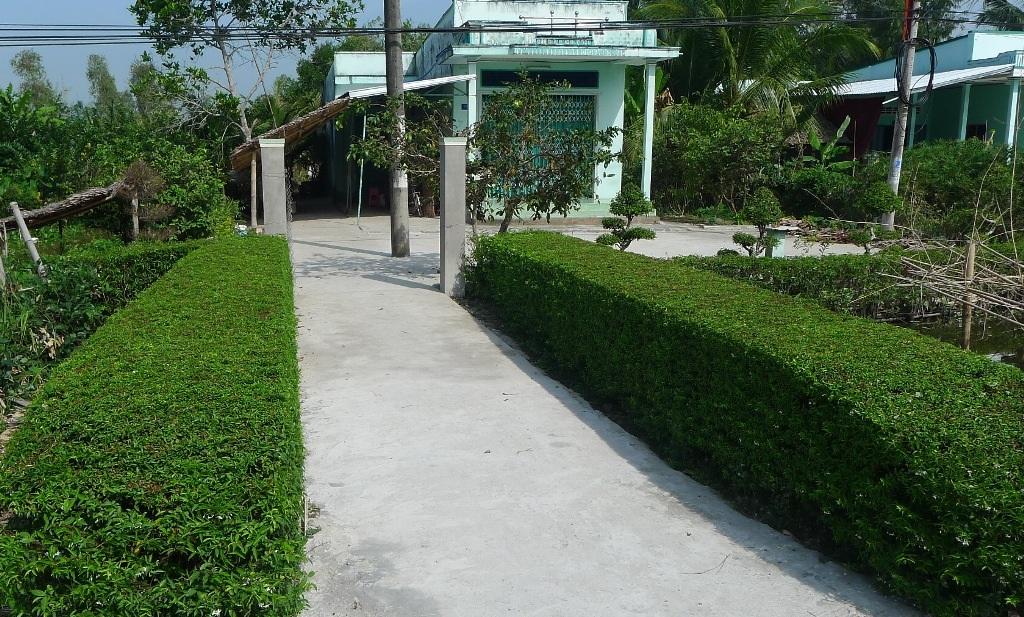 Một bờ rào xanh thẳng tắp từ cây mai trắng thủy