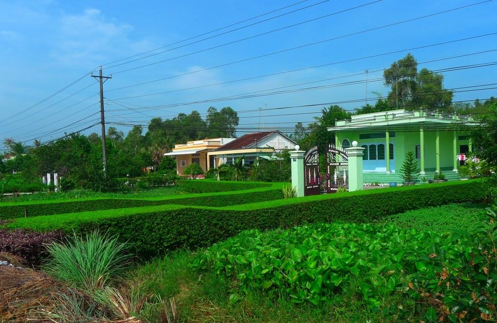 Một hàng rào xanh ở Hậu Giang