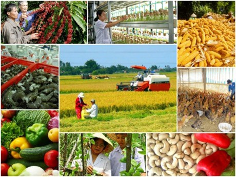 Vai trò của tri thức và doanh nghiệp được đề cao trong việc đổi mới tổ chức chuỗi giá trị sản xuất đến tiêu thụ sản phẩm nông nghiệp.