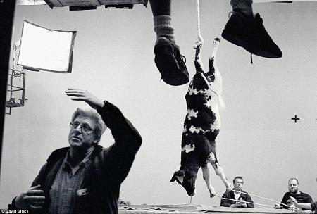 """""""Rat Race"""" (2001): Một chú bò sữa hình nộm được sử dụng trên phim trường."""