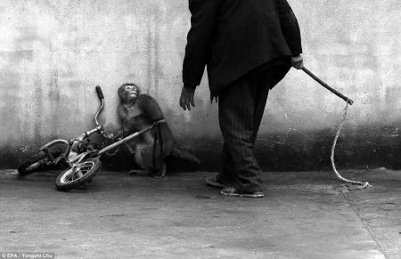 Giải nhất ảnh đơn ở hạng mục Ảnh thiên nhiên (Nature) - Yongzhi Chu (Trung Quốc):