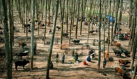 Giải nhất ảnh đơn ở hạng mục Cuộc sống thường nhật (Daily Life) - Cai Sheng Xiang (Trung Quốc):