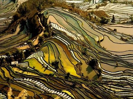 Ngắm nhìn những thửa ruộng bậc thang đẹp như tranh vẽ ở Vân Nam, Trung Quốc.