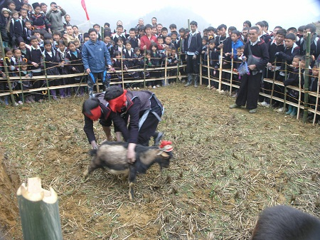 Du khách cùng dân bản tham gia trò chơi bịt mắt bắt dê trong hội xuân Gầu Tào Sa Pa.