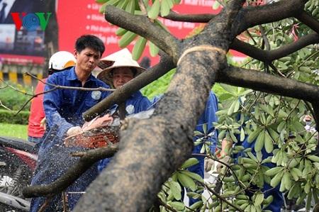 Các cây bị đốn đa số là hoa sữa trên phố Nguyễn Chí Thanh (Ảnh: Quang Trung).