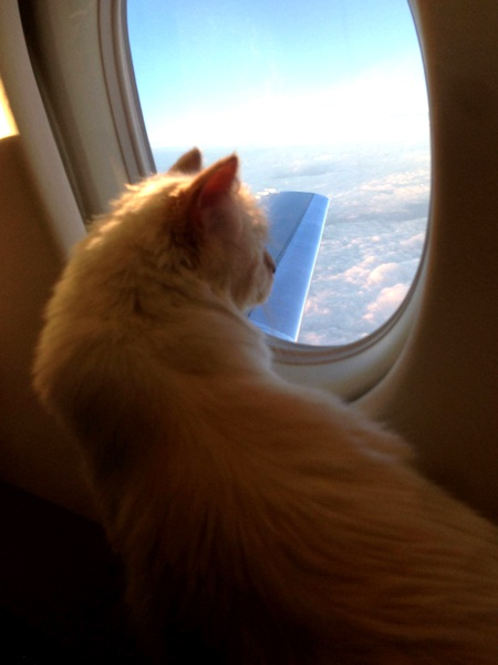 """Choupette luôn di chuyển bằng phi cơ riêng cùng với """"daddy"""" Lagerfeld."""