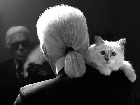 Cô mèo này có một lượng fan hùng hậu trên mạng xã hội với hơn 100.000 người theo dõi.