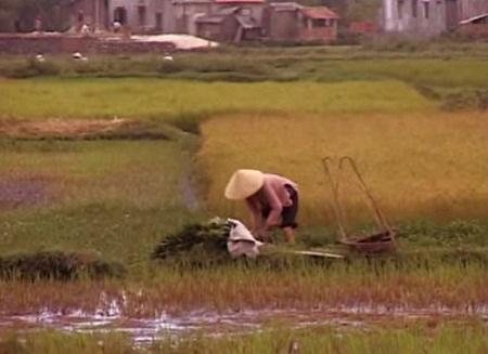 Những cảnh quay ở Việt Nam trong phim