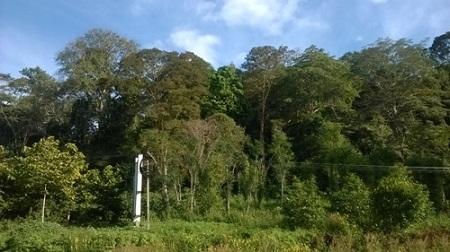 Rừng Cư H'Lăm tươi tốt với thảm thực vật đa dạng