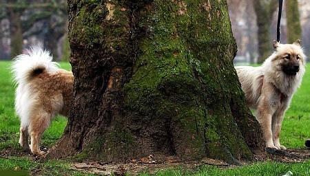 Hai chú chó đứng cạnh một gốc cây đã tạo thành một hình ảnh kỳ thú.