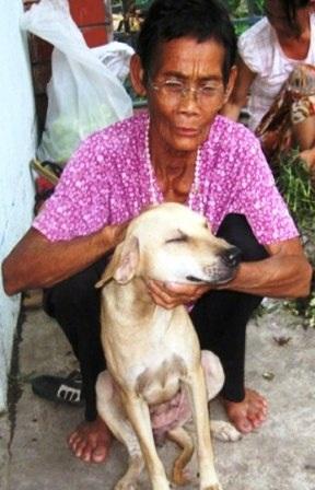 Dì Tư yêu thương những con chó của mình như Lão Hạc trong truyện ngắn cùng tên của Nam Cao