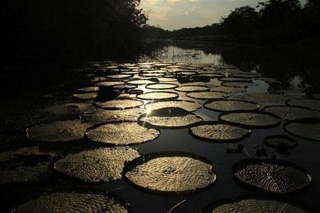Khám phá vùng rừng Amazon - 11