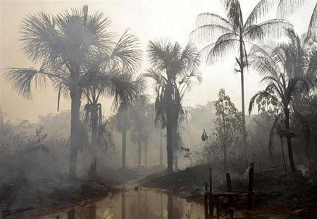 Khám phá vùng rừng Amazon - 5