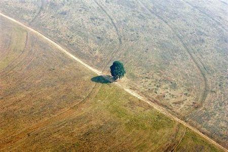 Khám phá vùng rừng Amazon - 7
