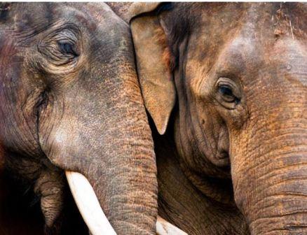 """Thế giới động vật """"yêu nhau"""" ngày Valentine - 14"""