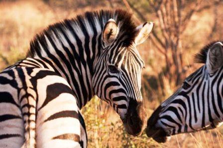 """Thế giới động vật """"yêu nhau"""" ngày Valentine - 15"""
