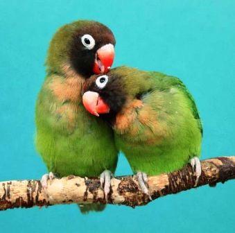 """Thế giới động vật """"yêu nhau"""" ngày Valentine - 1"""