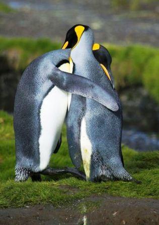 """Thế giới động vật """"yêu nhau"""" ngày Valentine - 2"""