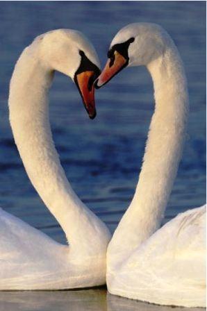 """Thế giới động vật """"yêu nhau"""" ngày Valentine - 3"""