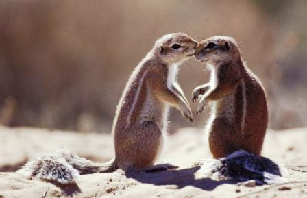 """Thế giới động vật """"yêu nhau"""" ngày Valentine - 4"""