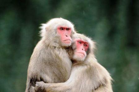 """Thế giới động vật """"yêu nhau"""" ngày Valentine - 5"""